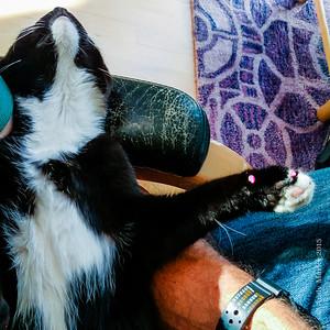 Lizzy cat nap